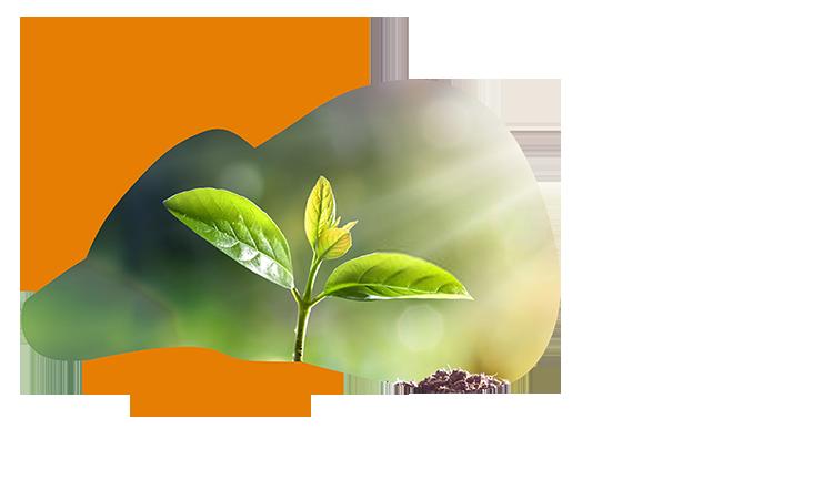 Incubation Ecosystem